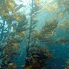 GREEN OCEAN FARMING