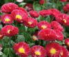 THE QINGZHOU FOUR SEASONS SPRING FLOWER GARDENING FARM