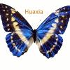HUAXIA LED VIDEO DISPLAY SCREEN & LED LIGHTING