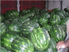 OLGA KIZIRIDOU FRUIT EXPORT-GREECE WASSERMELONEN