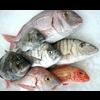FISHERIES INTL SARL