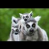 MADAGASCAR TOUR MANAGERS
