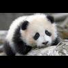 AL PANDA DIS TICARET LTD.STI.