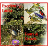 EXCELLENT LANKA TOURS AND TRAVELS