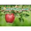 POMICULTURA.NET