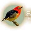 BIRDWATCHING TOURS