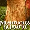 MUSHROOM BULGARIA
