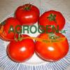 AGROGEN SA