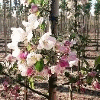 TREE NURSERY H&B PLANT