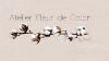 ATELIER - FLEUR DE COTON