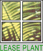 LEASE PLANT