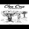 OLEA ERUS - OLIVE GROWING CULTURE