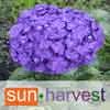 SUN HARVEST FLOWERS