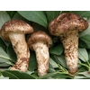 KUNMING JOHNLEEMUSHROOM CO., LIMITED