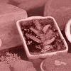 BRUGSE INTERNATIONALE VLEESMARKT