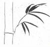 VERDURME PLANTENVERHUUR
