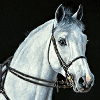 HORSE OF BELGIUM