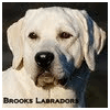 BROOKS LABRADORS LLC