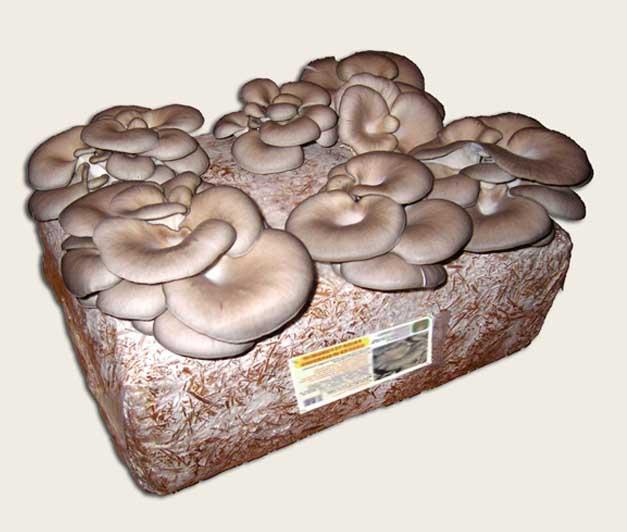 Funghi fai da te