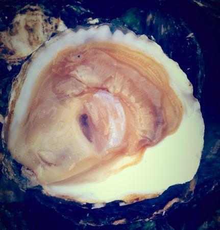 Huîtres plates affinées du Belon
