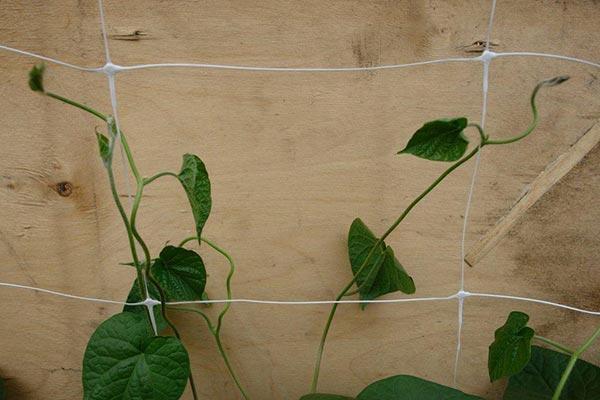 шпалерная сетка для вьющихся растений