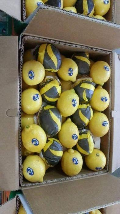 Египетский лимон - GANETELZOHOR
