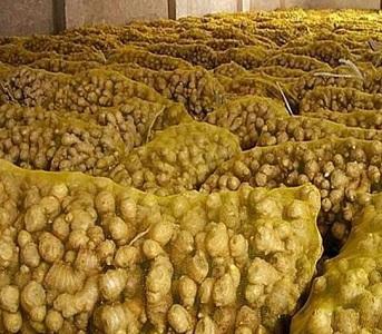 Gingembre frais - Gros gingembre frais de haute qualité
