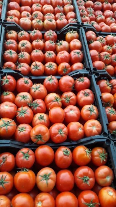 Pomodori inglesi - Biologica
