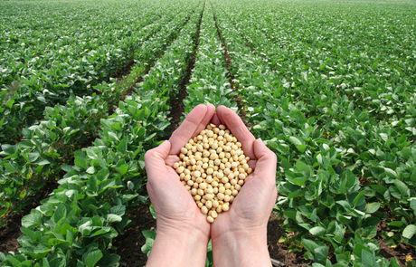 SOJA GMO - SOJA GMO ORIGEM BRAZIL - CIF AWSP - SBLC TOP 25 E TOP50