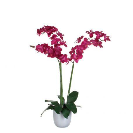 Plante Phalaenopsis Orchidée 100 Cm Violet - Plantes Artificielles