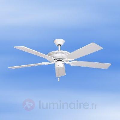 Ventilateur de plafond White-Eagle - Ventilateurs de plafond