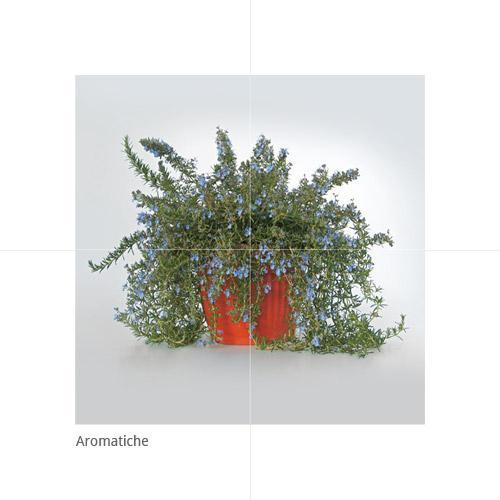 Aromatiche - null