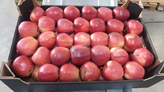 Gloster apples -