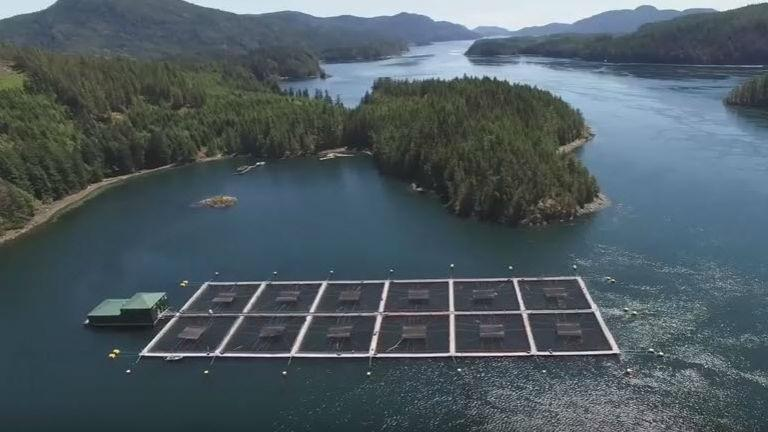 Aquaculture OX