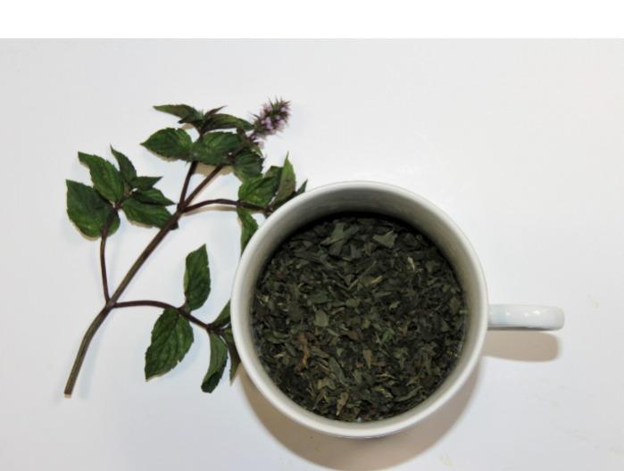 PEPPERMINT AND LEMON BALM  - Mentha × piperita, Melissa officinalis