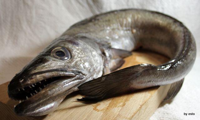 merluzzo o nasello - pesce azzurro