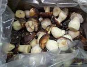 Белый Боровой гриб Boletus pinophilus -