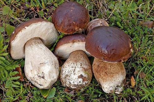 Dried Mushrooms (Boletus Edulis, Chanterelles, Morels)