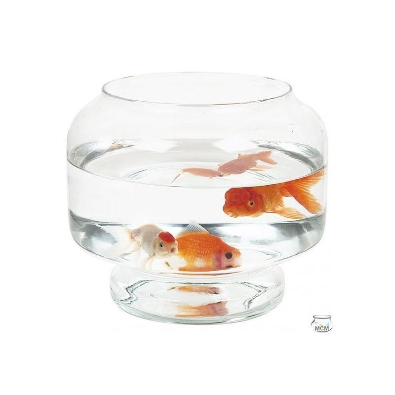 Aquarium Neptune, 23 cm, et 3,7 litres en verre 100% recyclé - Vases, Lanternes, décoration