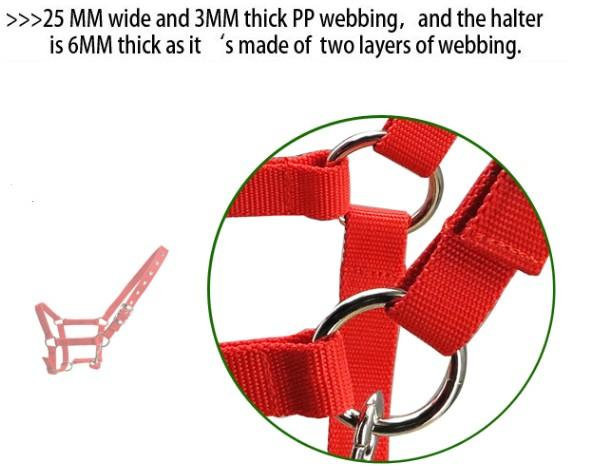horse halter with SS fittings - horse halter