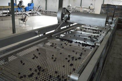 Production of prunes - Purchasing and processing of prunes