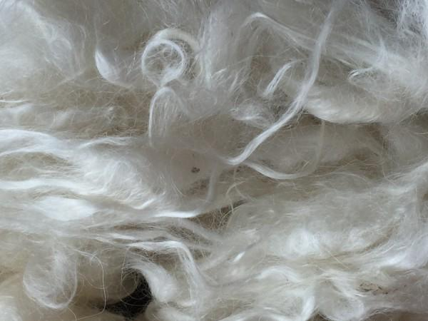 Washed MOHAIR - WOOL IN BULK