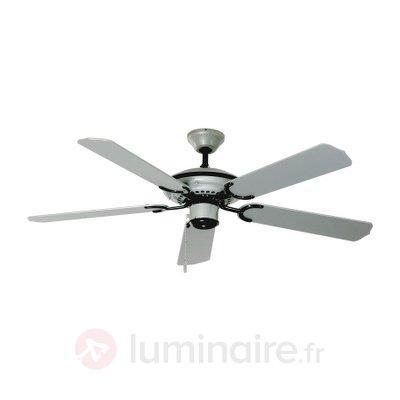 Ventilateur de plafond Sydney - Ventilateurs de plafond