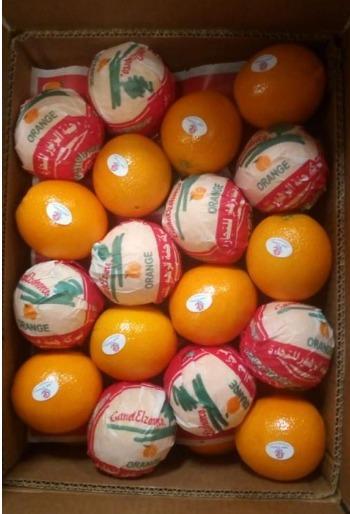 Egyptian Fresh Navel orange  - Organic