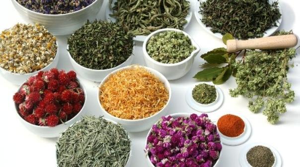 Ervas e Plantas Aromáticas - Desidratados