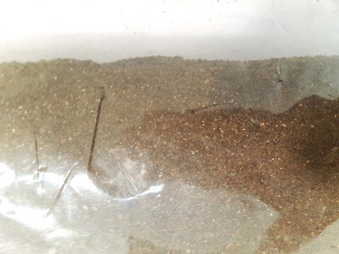 Engrais Biologique à base de Guano -