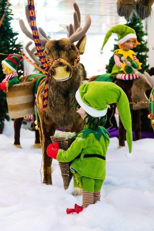 Christmas Elf feeding reindeer - null