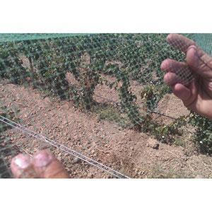 anti-bird netting -