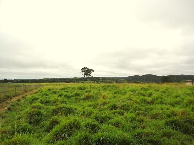 Farmland for sale in Mato Grosso Brasil - Reference: FARM MT-001
