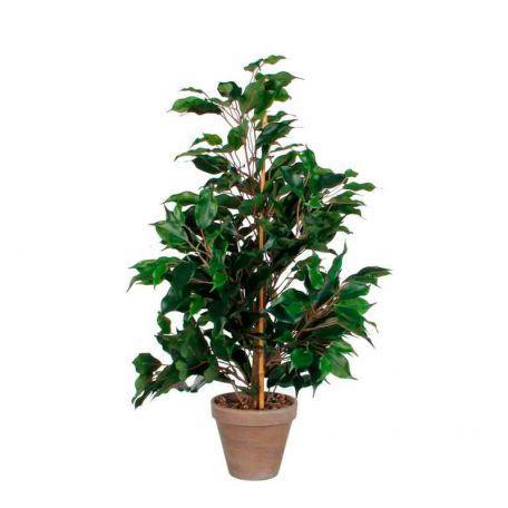 Plante Artificielle Ficus Exotica 65 Cm - Plantes Artificielles